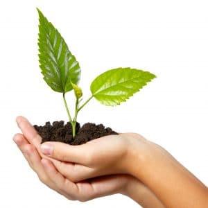 investir dans les bois et forêt