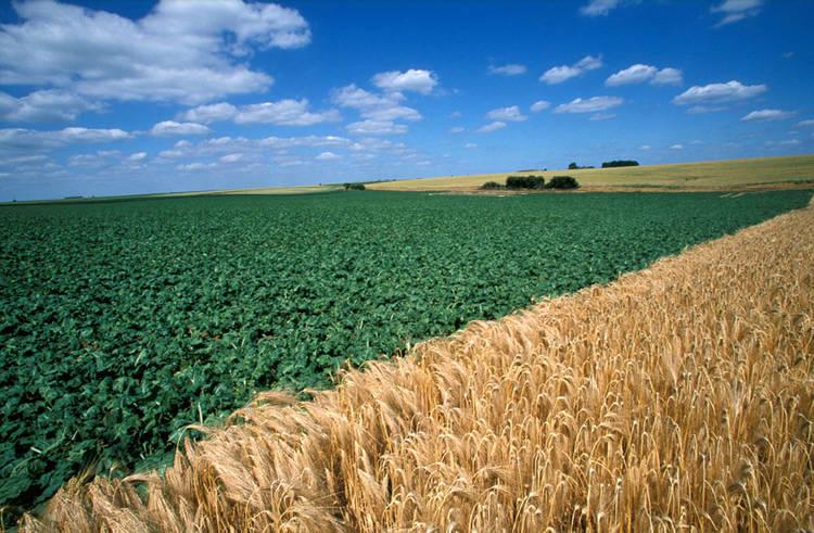 l'ISF et le groupement foncier agricole