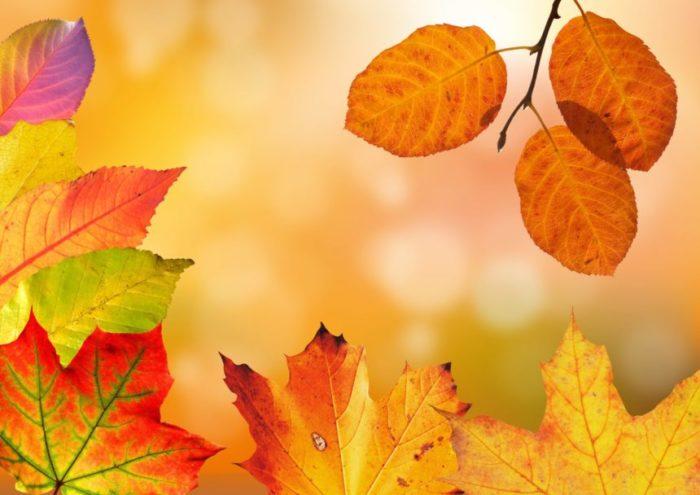 brèves d'automne